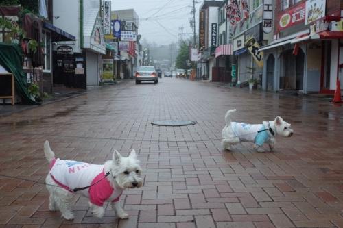 taifu11gounoamede3.jpg