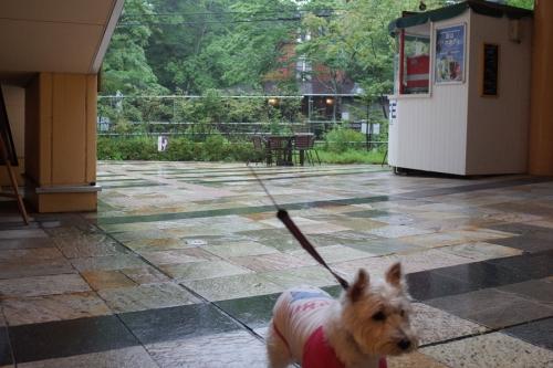 taifu11gounoamede5.jpg