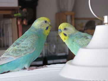 20110818 ピロ&チョロ①