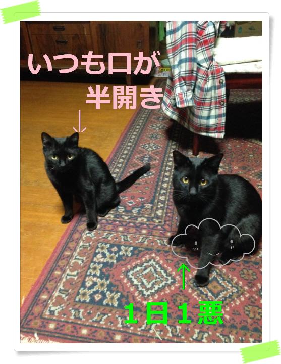 編集_IMG_2362