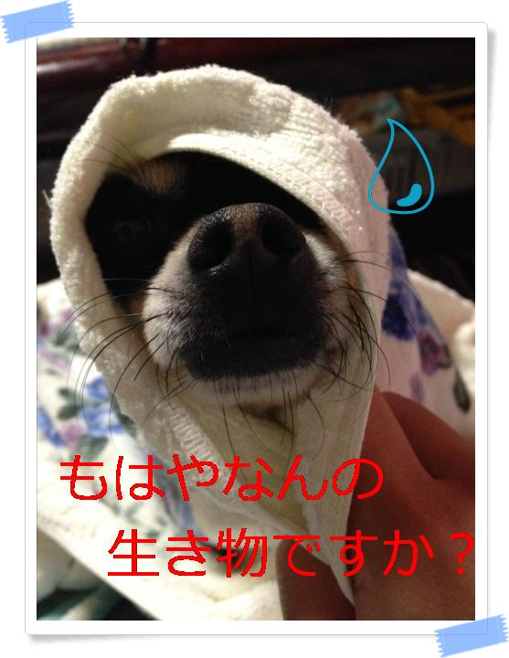 編集_IMG_2536