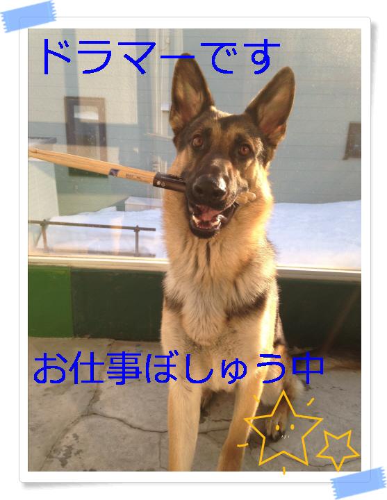 編集_IMG_2641