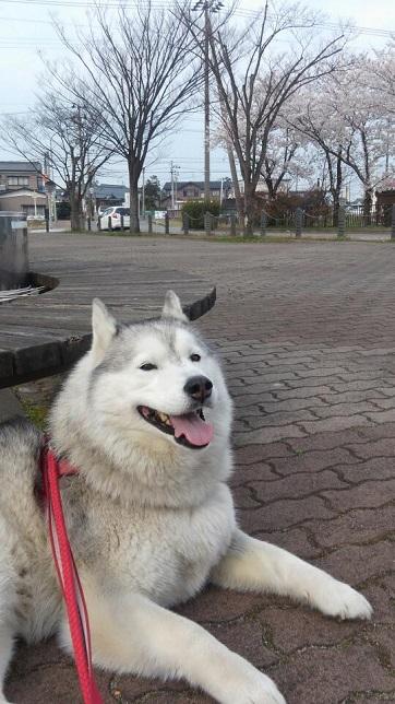 2014-04-22リサちゃん
