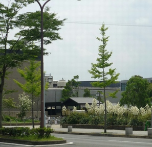 140626植物園