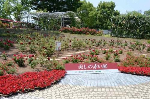 DSC_2663花フェスタ記念公園