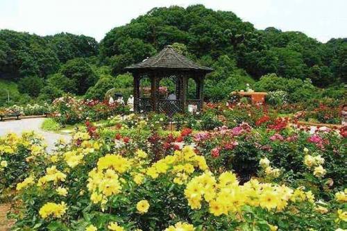 花フェスタ記念公園001