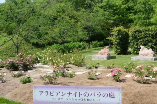 DSC_2761花フェスタ記念公園