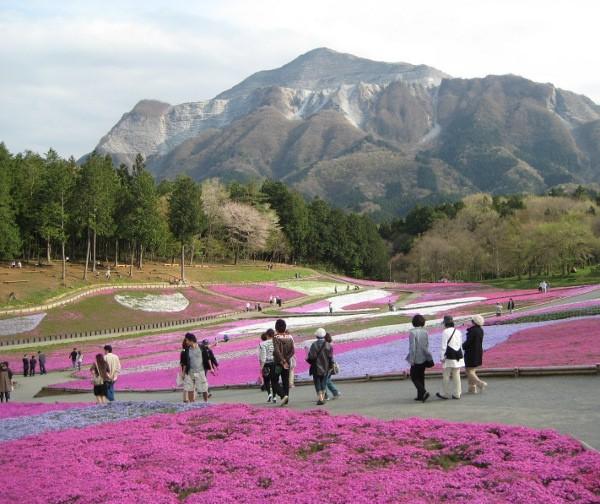 フードアナリストのいぶくろブログ-芝桜と羊山公園と武甲山