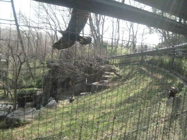 フードアナリストのいぶくろブログ-多摩動物公園_バードゲージ
