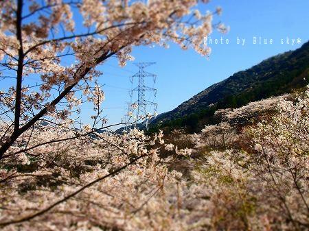 桜と鉄塔ジオラマ