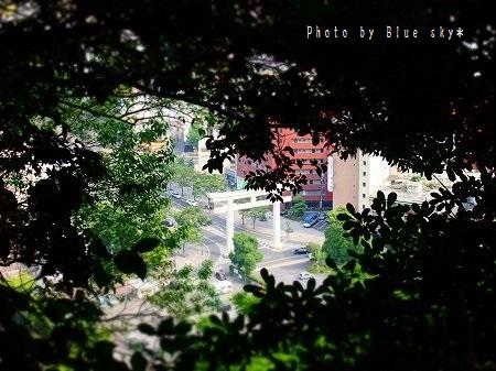 城山から照国神社