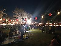 nikorasuに桜