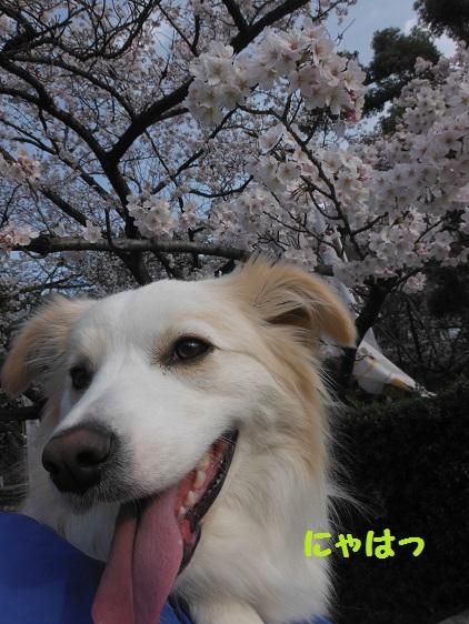 2014-03-29-05.jpg