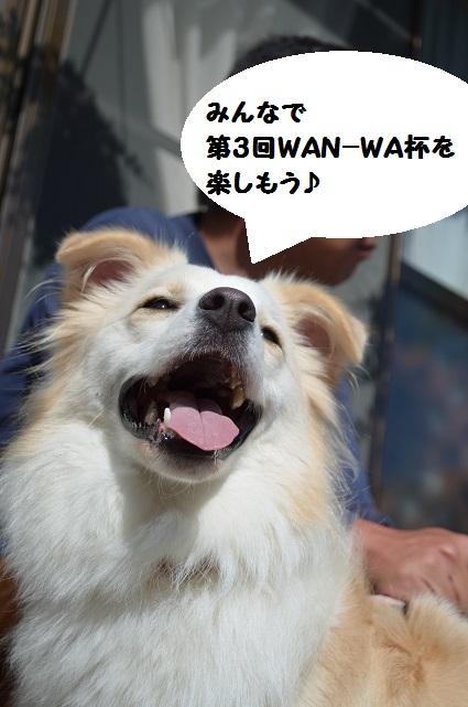 WAN-WA-3-1.jpg