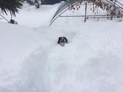 雪に溺れるあぷぷ