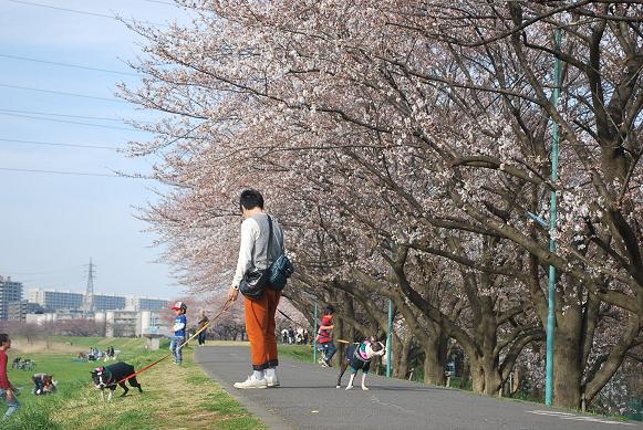 20140329DSC_1446.jpg