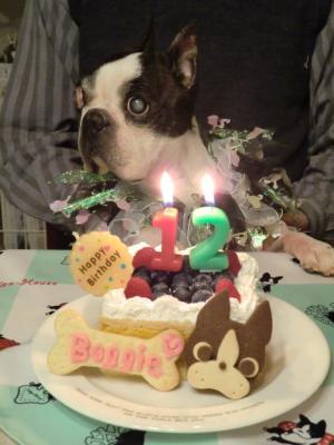 Boggie+s+last+birthday_convert_20140215170829.jpg