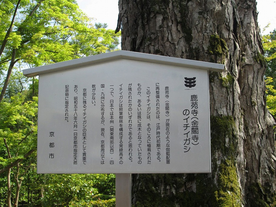ichiigashi02.jpg