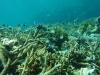 黒島沖~水深3~4mでこんな感じ