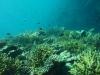 鳩間沖~サンゴの上を魚たちが乱舞、色とりどりで綺麗ですよ~!