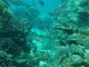 鳩間沖~このポイントはサンゴや岩の下に隠れた魚たちの群れが見れます!