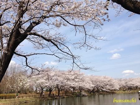 太田ヶ谷池