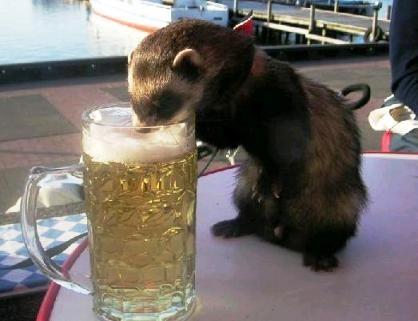 animal_wine_024.jpg