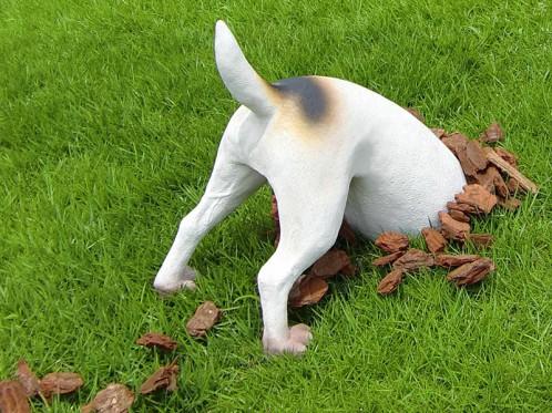 dog-ana1-498x373.jpg