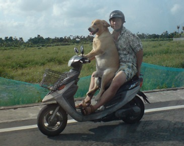 dog-driving-a-scooter30.jpg