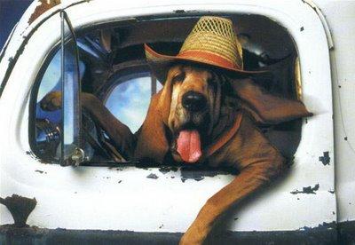 dog_driver.jpg