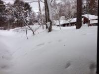 0215大雪直後_convert_20140219164120