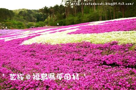 ジュピアランドひらたの芝桜@福島県平田村