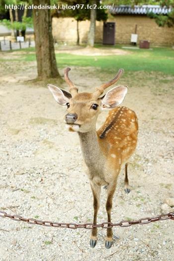 奈良公園の鹿さん♪