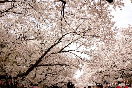 上野公園の桜2014