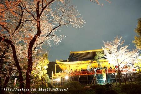 上野公園の夜桜2014