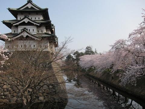 縮小城と桜