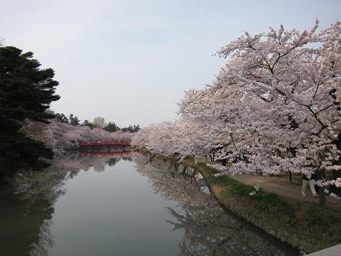 赤い橋と桜縮小