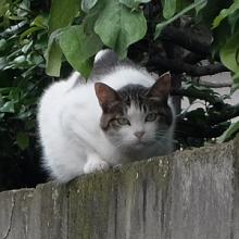 街の猫くん