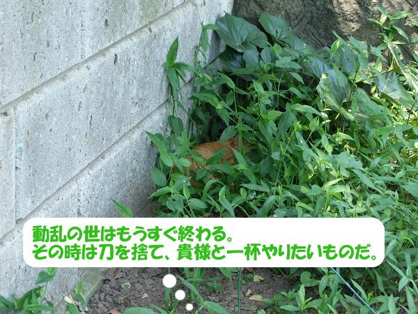 mc-140722h.jpg
