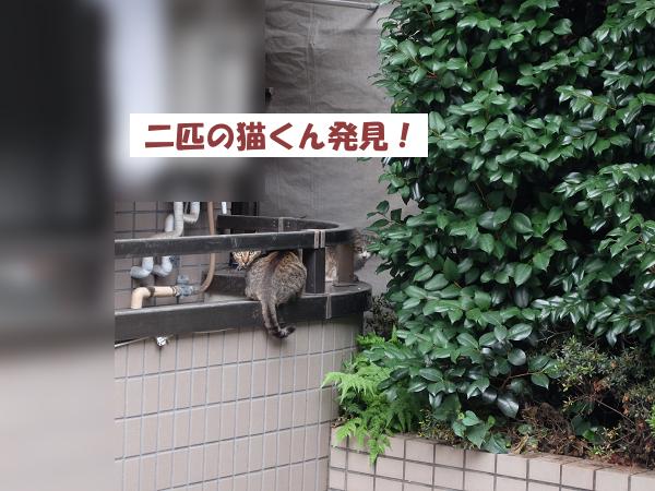 二匹の猫くん発見