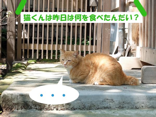 猫くんは昨日は何を食べたんだい