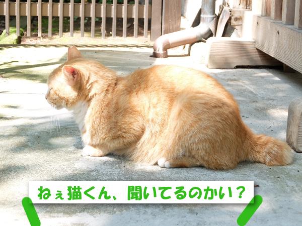 ねぇ猫くん、聞いてるかい