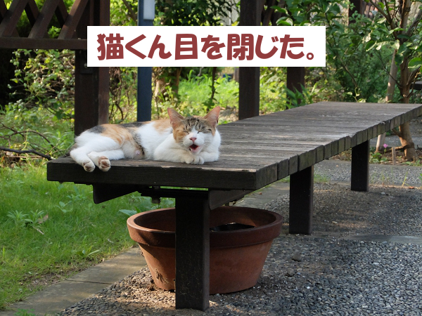 猫くん目を閉じた