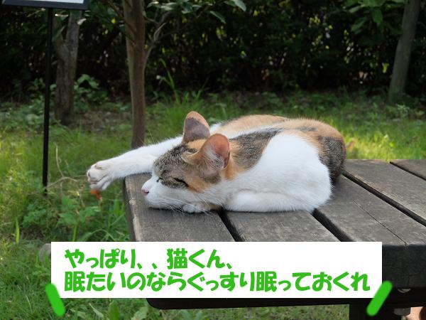 猫くん、眠たいのならぐっすり眠っておくれ
