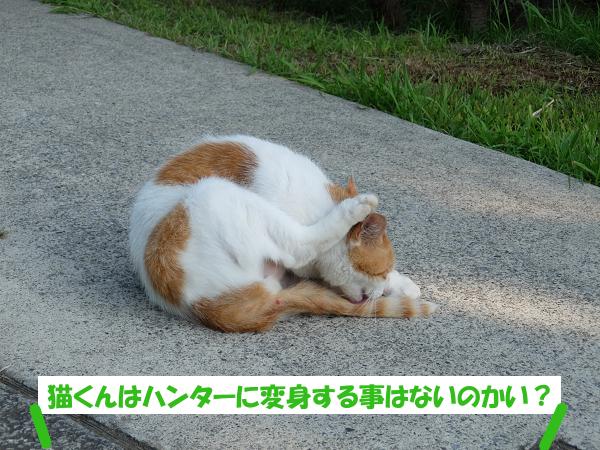 猫くんはハンターに変身する事はないの?