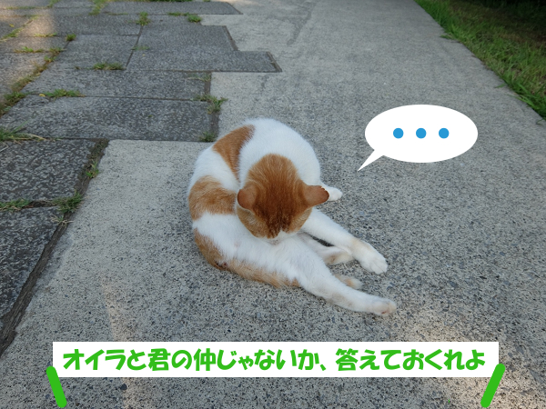 ねぇ猫くん、オイラと君の仲じゃないか、答えておくれよ