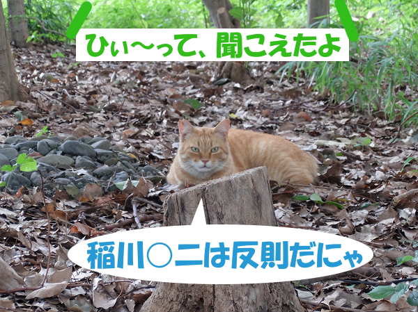 稲川○二は反則だにゃ