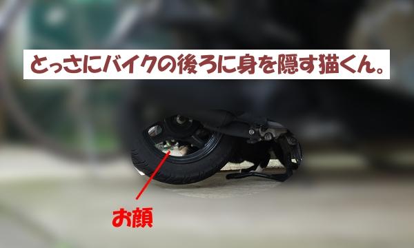 バイクの後ろに身を隠す猫くん