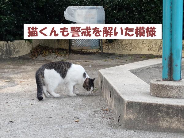猫くんも警戒を解いた模様