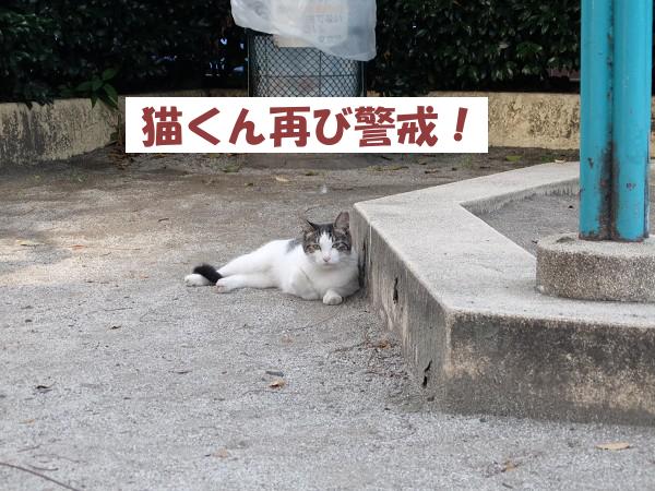 猫くん再び警戒